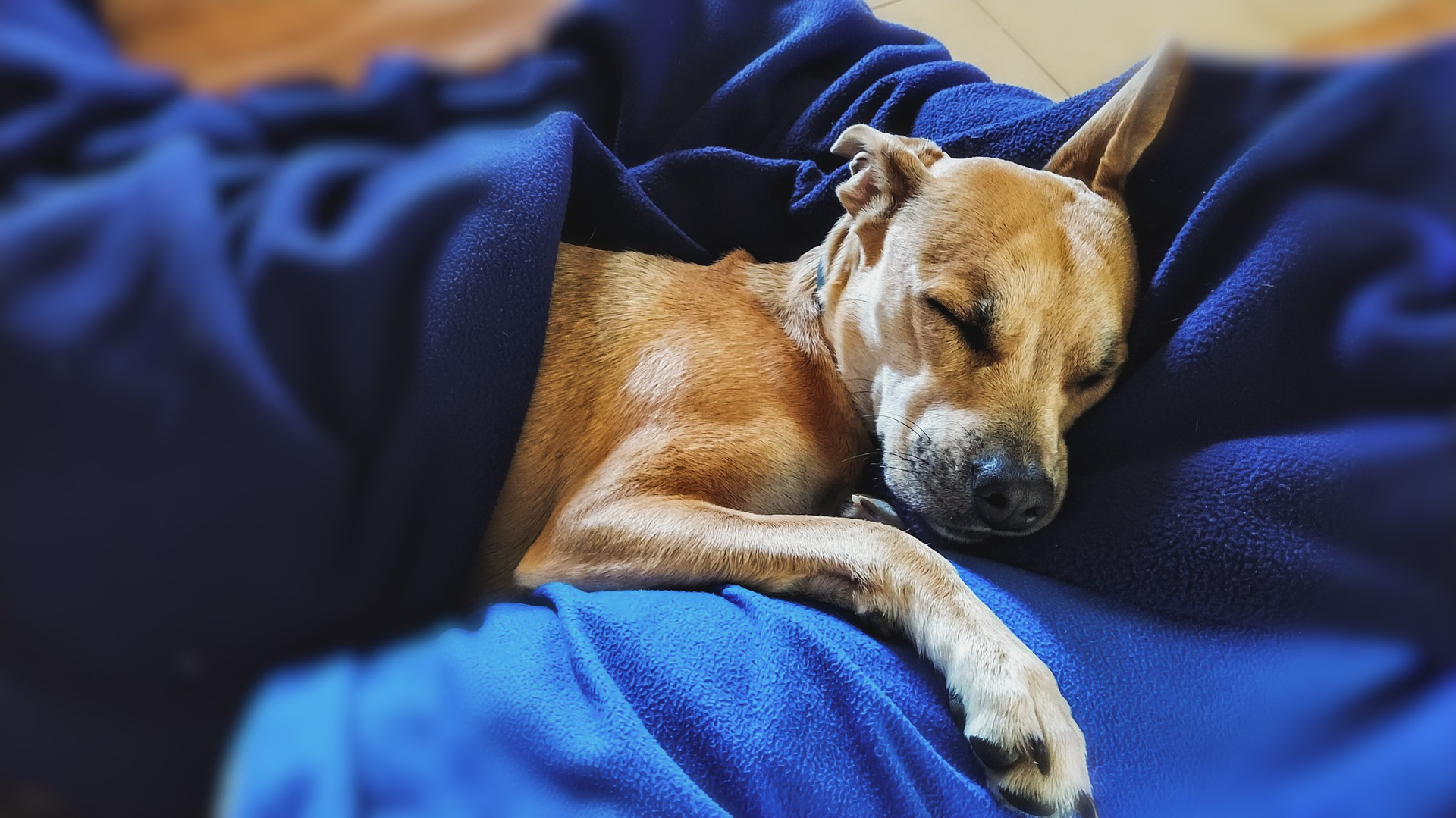 wady i zalety spania ze zwierzakiem sypialnia łóżka do sypialni